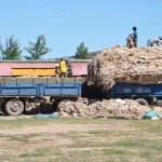 Loading sheep wool - Kharkorin, Mongolia
