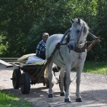 Nice horse pulling cart -