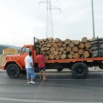 Wood harvesting everywhere - Montenegro