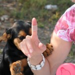 Puppy accidentally bit the hand that feeds her - Bulgaria