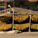Tobacco drying - Turkey