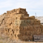 Hay stacked - Georgia