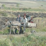 Donkey cart - Georgia