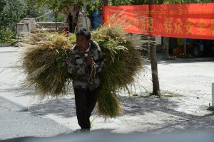 Fodder for family animals - rural Tibet